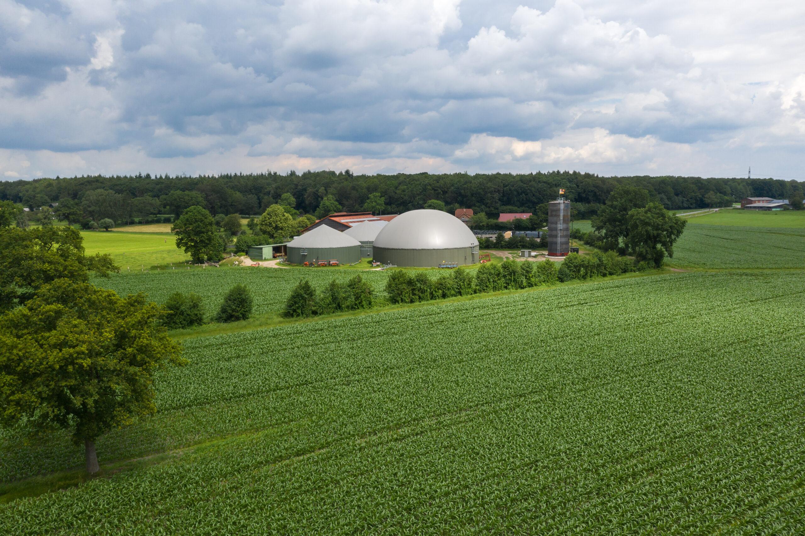 Biovoimalaitos luonnon ympäröimänä